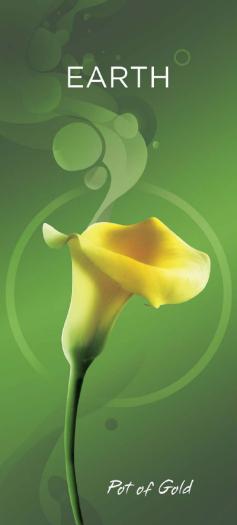 Bloomz New Zealand Zantedeschia Calla Lily Tissue